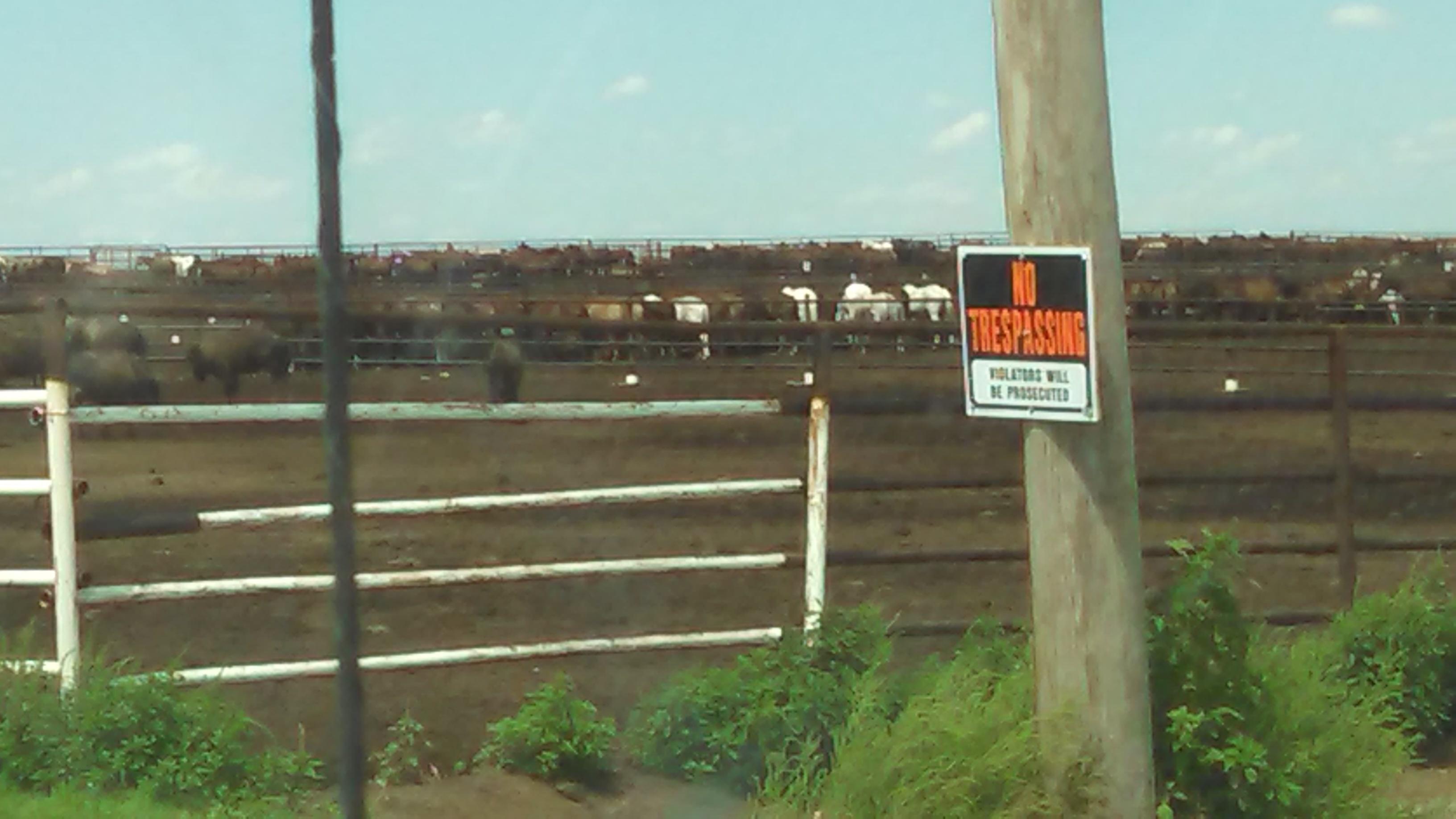 Photos of wild mares (& bison) on BLM\'s contracted feedlot in Scott ...