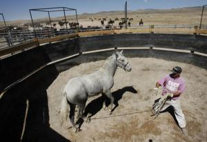 """In this 2007 file photo, an inmate works with """"Norton"""" in the round pen with part of the herd in the background as part of the wild horse program at the Gunnison State Prison in Gunnison. Tom Smart, Deseret News"""