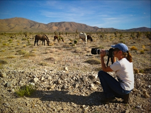 Terry Fitch of Wild Horse Freedom Federation photographing members of the Cold Creek Herd, Sept. 2012 ~ photo by R.T. Fitch