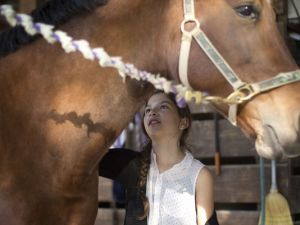 Ava Exelbirt brushes one of the remaining horses at Masterpiece Equestrian Center in Davie, Fla. ~ (Photo: J Pat Carter)
