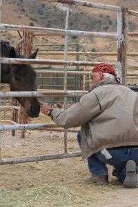 A recently traumatized wild horse reaching out to R.T. Fitch at BLM's Palomino Valley holding facility ~ photo by Terry Fitch of Wild Horse Freedom Federation