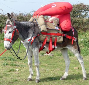 Getting ready to test the red saddle. / Courtesy Peter Muckle.