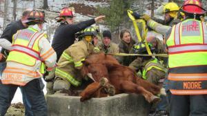 Goshen+Horse+Rescue