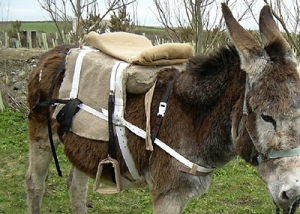 he first version of the saddle was made of hessian with straw stuffing. / Courtesy SaddleAid.