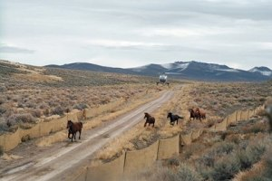 Fish Creek HMA roundup (photo:  Bureau of Land Management)