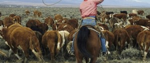 rancher-1a-620x264