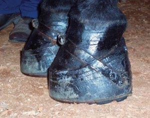 walkinghorseshoes