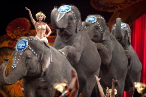 ringling-bros-circus-stop-elephant-acts-by-2018