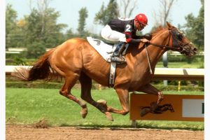 MICHAEL BURNS / MICHAEL BURNS PHOTO Thoroughbred race horse Backstreet Bully finished first in this August 2008 race at Fort Erie. The race horse changed ownership after retirement and was sent to slaughter, despite frantic last-minute pleas to save his life by people who knew the horse had been given veterinary drugs over his lifetime that made him unsafe for human consumption.
