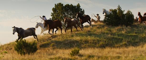 Harassing Horses