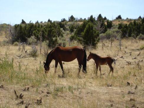 horse_photos.Par.85398.Image.500.375.1