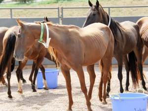 horse_rescue_92_1441257229188_23573560_ver1.0_640_480