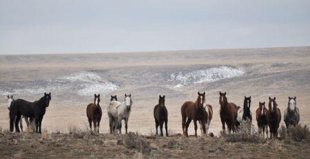 wild_horses.Par.1257.Image.450.232.1