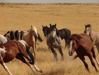 wild_horses.Par.15440.Image.350.263.1