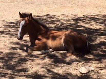 635743090423547027-davis-horses3