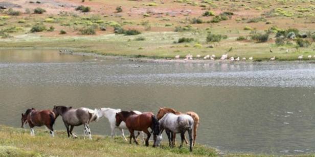 horses-change.org_