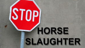 stop_sign_horse_slaughter