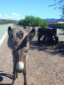 Highway along Colorado river has NO wildlife underpass or crossing