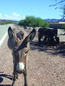 Highway along Colorado river has NO wildlife underpass or crossing