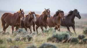 Carol Walker: At McCullough Peaks Herd Management Area in Wyoming, Walker caught a family of wild horses in early morning with a Canon EOS-1D X and 600mm f/4L IS II Canon EF lens. Exposure was 1/1000 at f/4, ISO 1250.