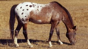 Indian Horses before Colmbus_html_49f8814f
