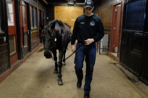 1st Lt. Daniel Nicolosi escorts Kennedy -- one of two horses available for adoption -- in the Caisson barn at Ft Myer in Arlington, VA, on Feb.17, 2016. MUST CREDIT: Washington Post photo by Bonnie Jo Mount