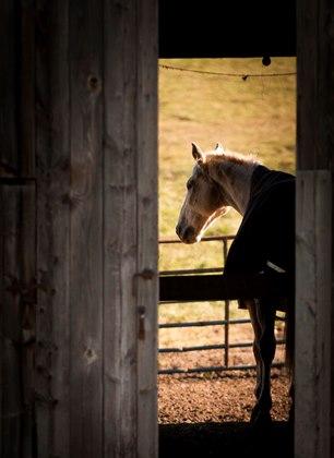 depressed-horse-2