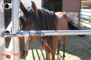 Monty locked in his stall Michelle Forster