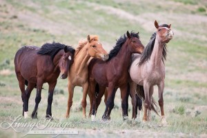 A wild horse family in Adobe Town