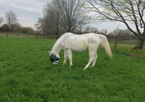 Lily seen here at a private rehab farm following her discharge from New Bolton Center. (Photo courtesy of New Bolton Center)