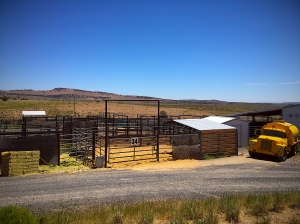 Home of BLM sterilization experiment lab at Hines, OR holding facility - photo by R.T. Fitch of Wild Horse Freedom Federation