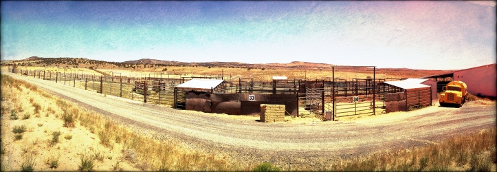 BLM Hines Holding Facility - Wanna Be Home of Frankenstein Sterilization Experiments ~ Photo by R.T. Fitch of Wild Horse Freedom Federation