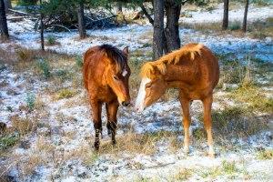 photo courtesy of wildhorsesofalto.blogspot.com