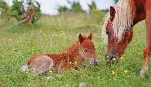 ponies_family-300x174