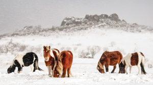 ponies_snow-300x167