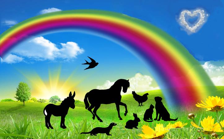 rainbow-bridge-v4