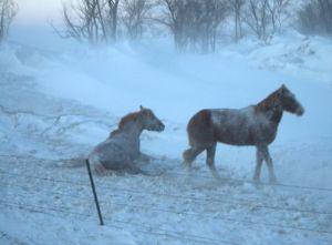 SD Horses