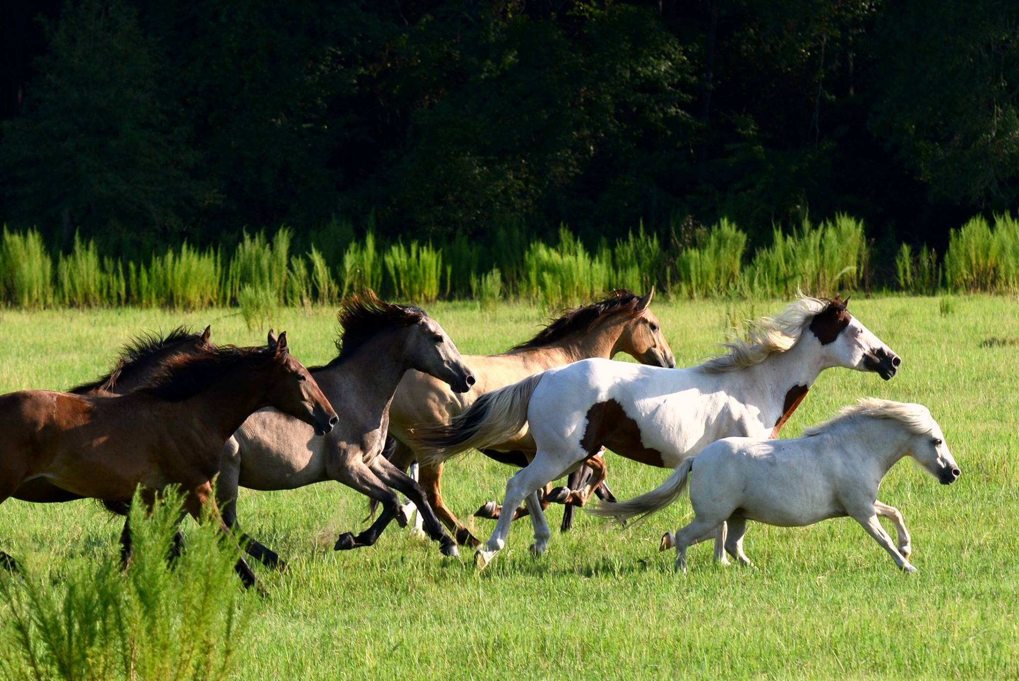 How our wild horses ended up being sent overseas to Germany — Straight from the Horse's Heart